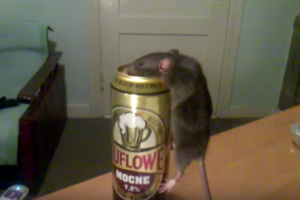 Visit San Francisco's First Rodent Bar