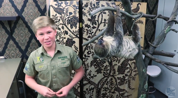 Watch Steve Irwin's Son Beautifully Follow in His Dad's Footsteps