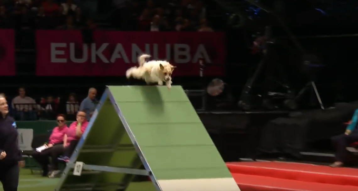 This Rescue Dog Won Everyone's Heart After Hilariously Terrible Agility Run